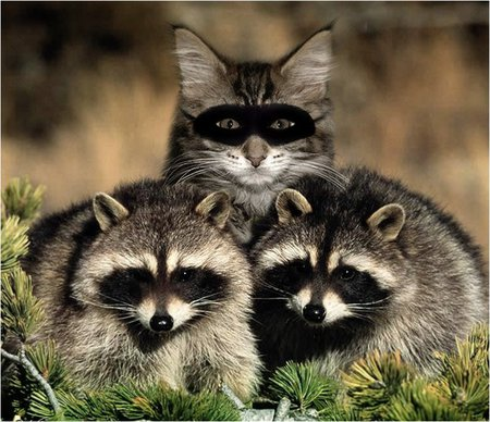 cat&coons
