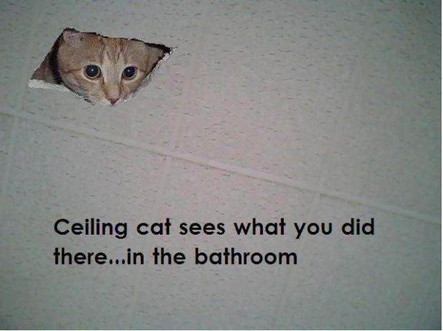 Ceilingcat