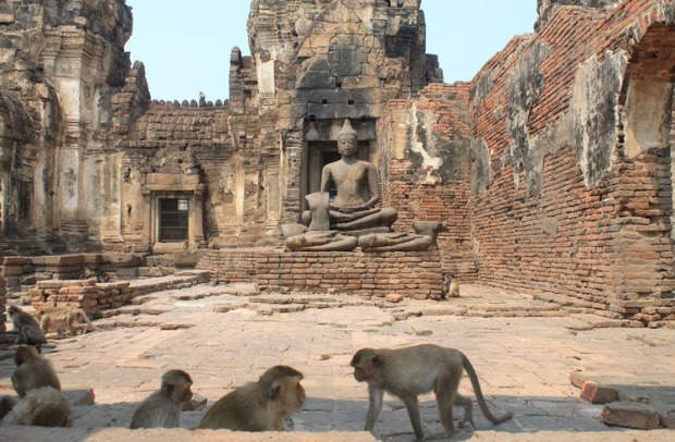 monkey-temple-lopburi-thailand