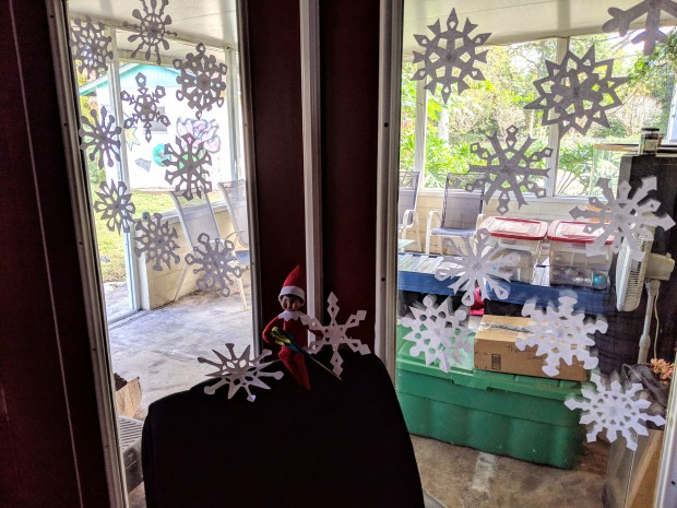 Elf on the shelf cutting out paper snowflakes and taping them to a french door.